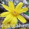 Healing Shame - Flower
